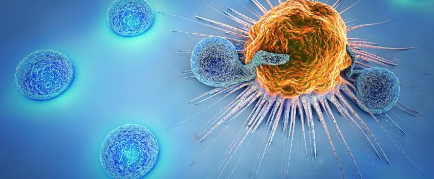 Blue T cells attacking orange cancer cell