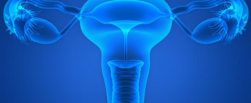 Illustration of ovaries and womb in blue