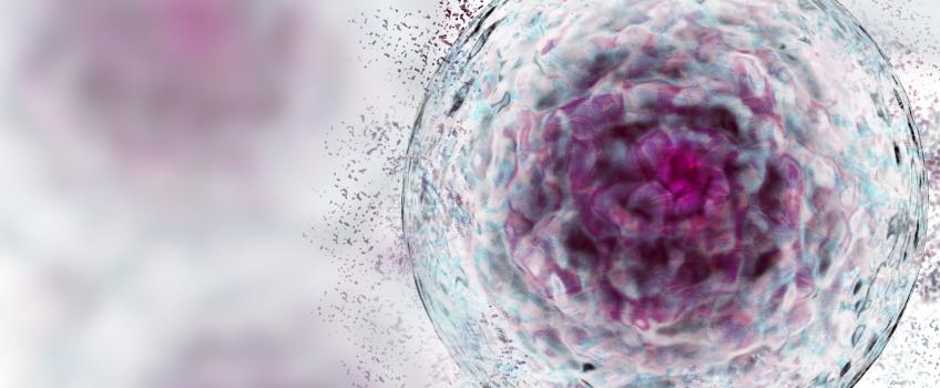 3D rendering of a stem cell
